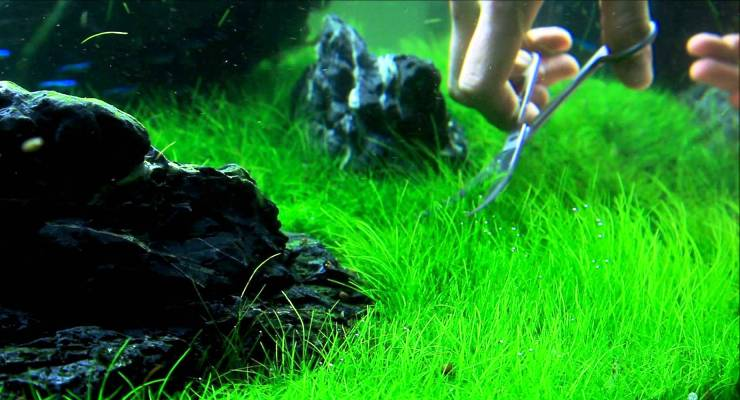 Aquascape & Ikan Hias Indah