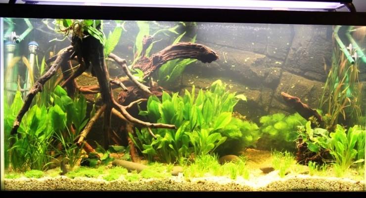 Ikan & Tanaman Taman Air
