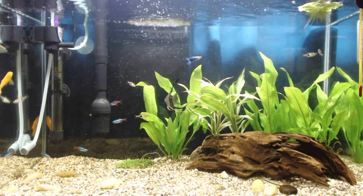 CO2 Aquascape Aquarium