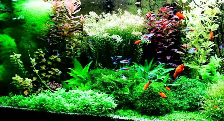 Lampu & CO2 Aquascape
