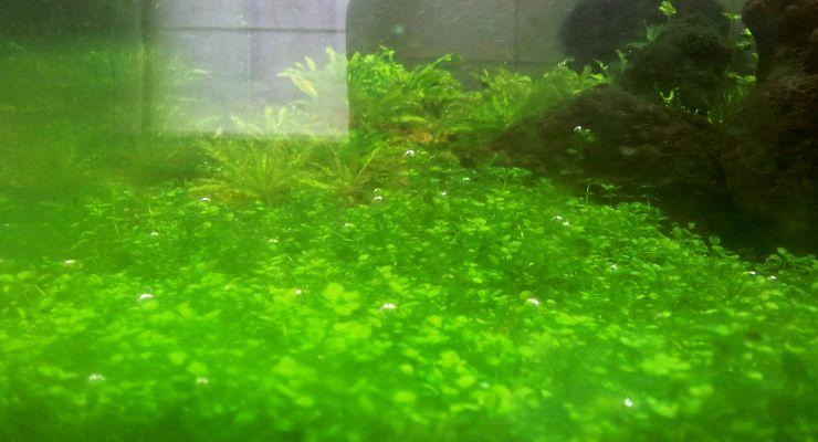 Alga Ikan & Aquascape