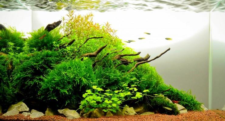 Aquascape Gaya Alami / Natural Style