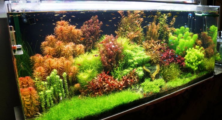Aquascape gaya Belanda Dutch