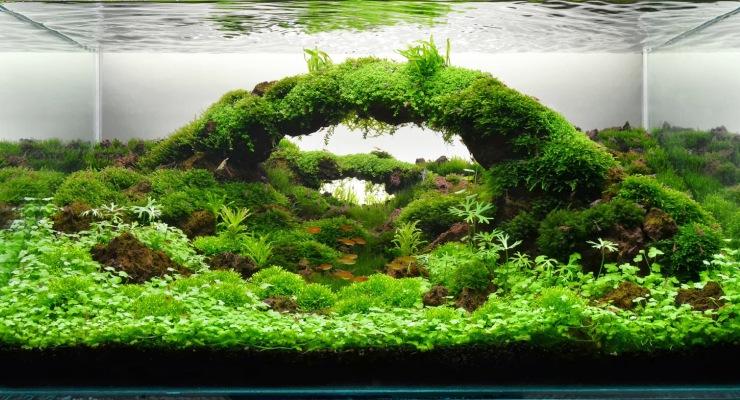 Desain Aquascape & Jenis Ikan