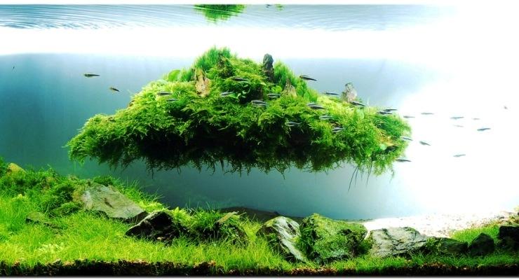 ikan hias molek aquascape