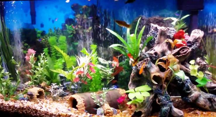 Memelihara Kesehatan Ikan & Aquarium