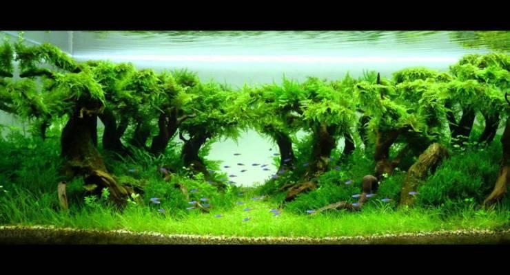 Penggunaan Pupuk untuk Aquascape