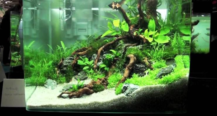 Tips merawat Ikan & Aquascape
