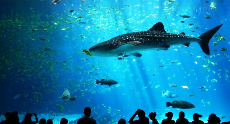 Aquarium Raksasa di Istambul