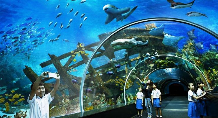 Melihat Aquarium Unik Dunia