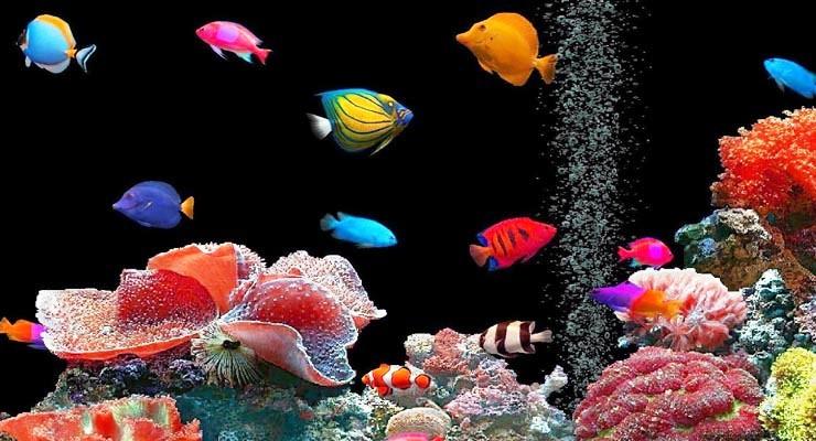 Menjaga Aquarium Bersih & Sehat