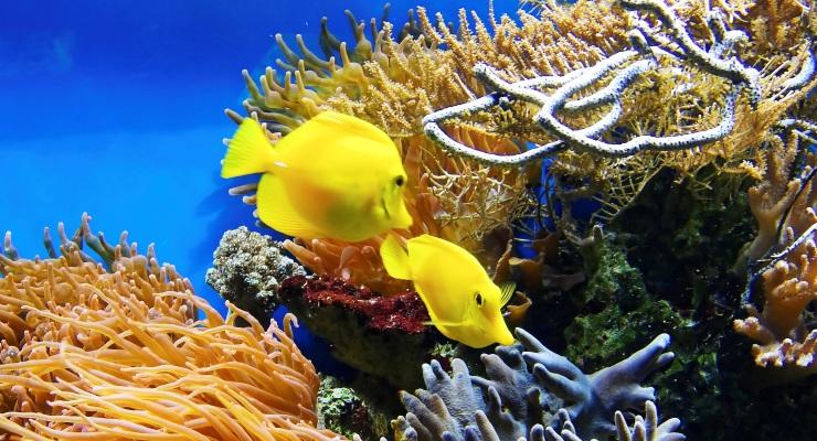 Aquarium Aquascape Indonesia Jakarta