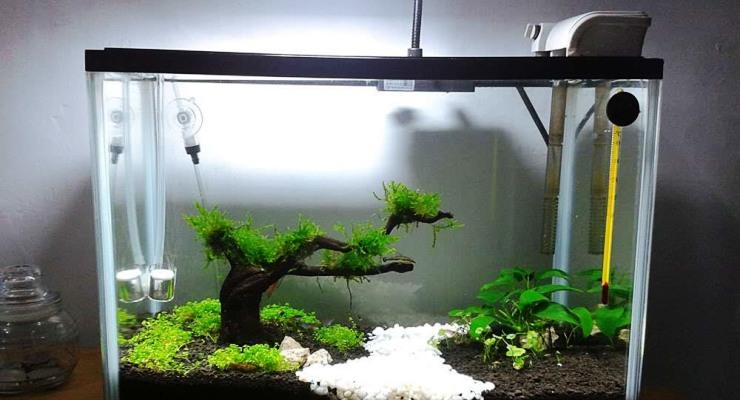 Aquarium mini cantik menawan
