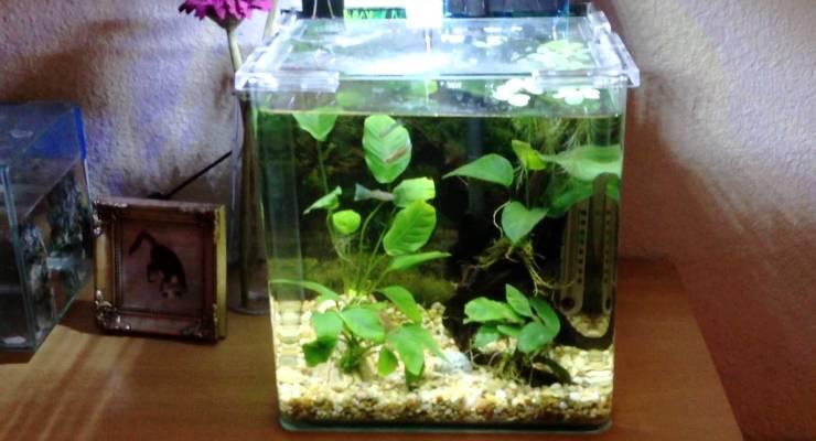 aquarium mini taman air