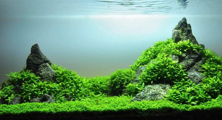 Aquascape Gaya Iwagumi