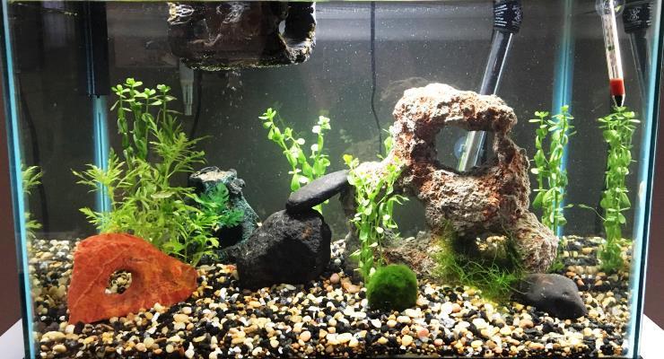 Kematian Ikan & Kegagalan Aquascape