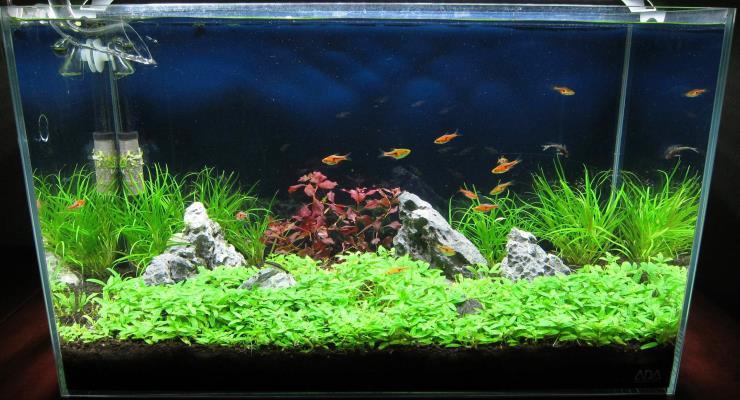 Mendesain Aquascape & Ikan Hias