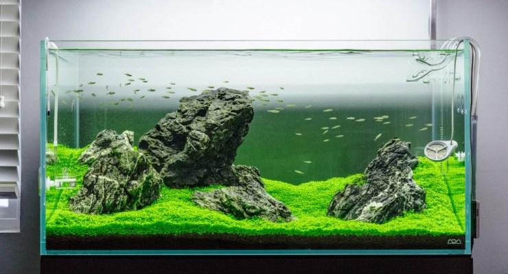 aneka style gaya aquascape