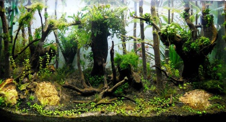 Aquascape bergaya Hutan (Jungle Style)