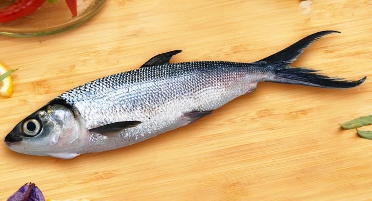 Kandungan Nutrisi Ikan Bandeng