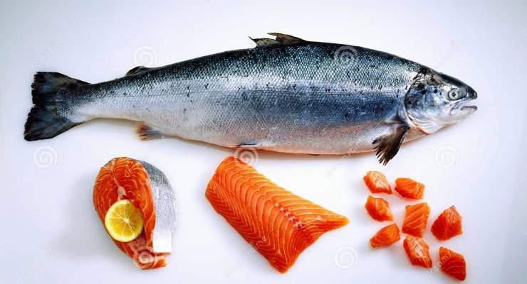 Mengenal Budidaya Ikan Salmon