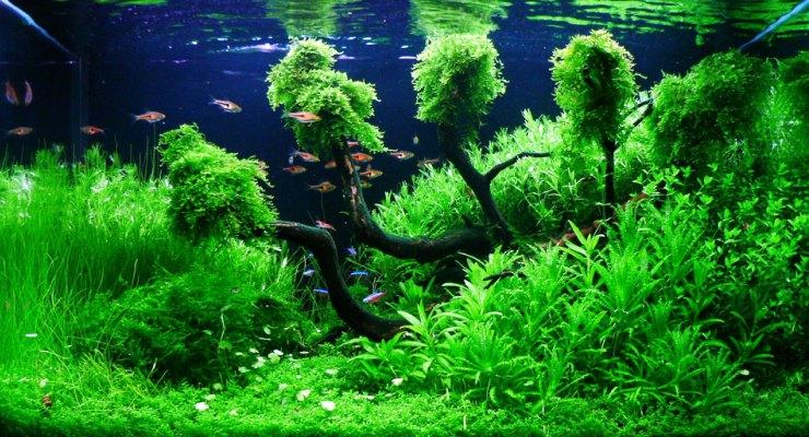 Perbedaan Aquascape & Aquarium