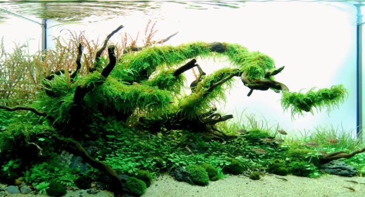 Perbedaan Aquascape dengan Aquarium