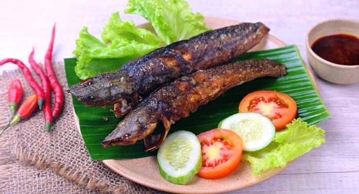 Beternak Ikan Lele Surabaya