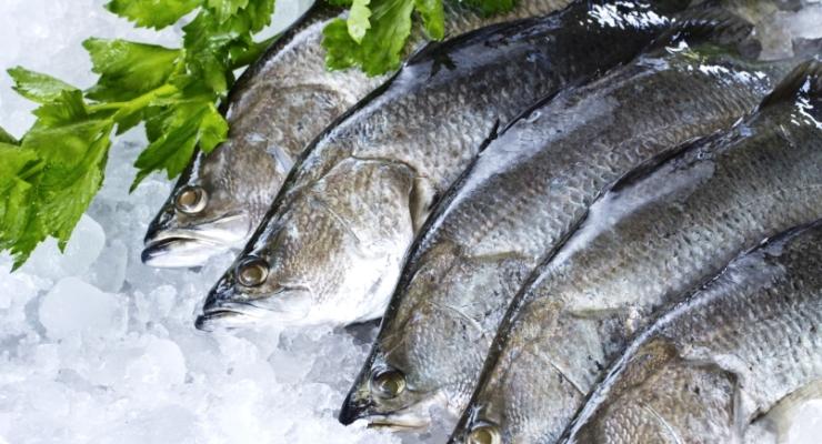 Manfaat Gizi Ikan Kakap Putih