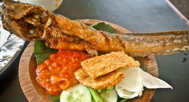 Sukses Beternak Budidaya Ikan Lele