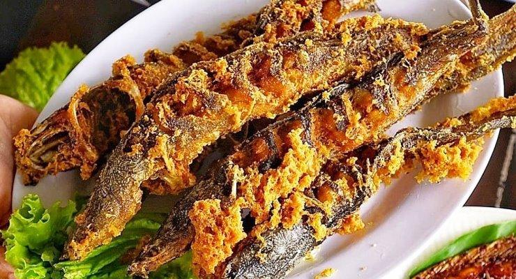Tips Budidaya Ikan Lele