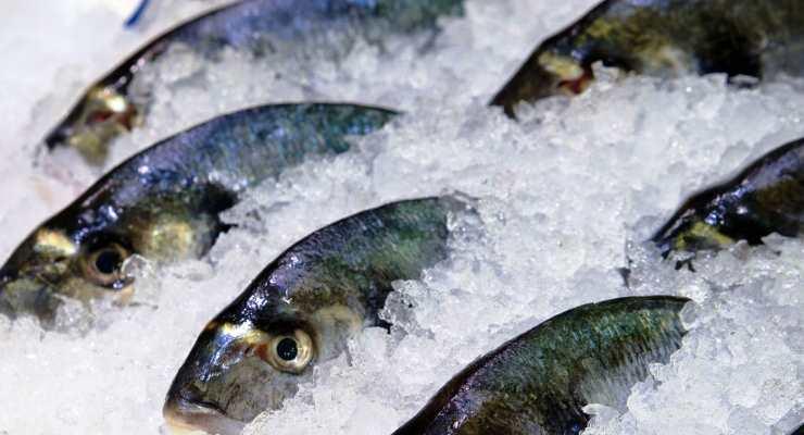 Cara Mencairkan Ikan Beku