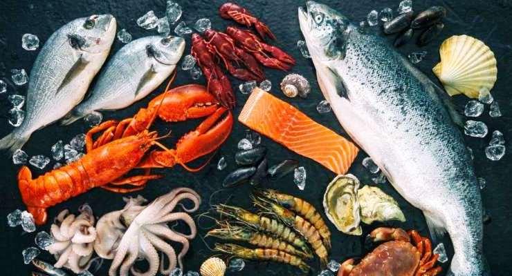 Entrepreneurship bisnis ikan laut