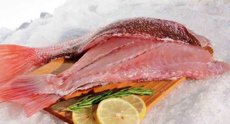 Manfaat Ikan kakap Merah